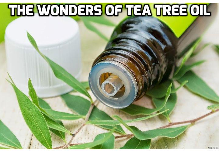 25 Really Wonderful Tea Tree Oil Benefits for You  -  Tea tree oil is noted for its anti-microbial properties, fighting bacteria, inhibiting the growth of fungi, and potentially wiping out certain viruses. Read on here to learn about the 25 tea tree oil benefits.